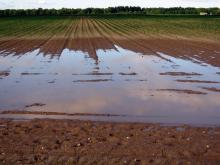 שדות מוצפים